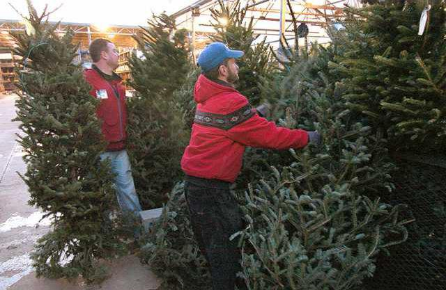 lowes employees kevin adams right and drew couch stand up a selection of christmas trees for sale at a reduced price tuesday evening at the shallowford - Lowes Christmas Tree Sale
