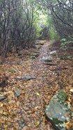 Soque trail