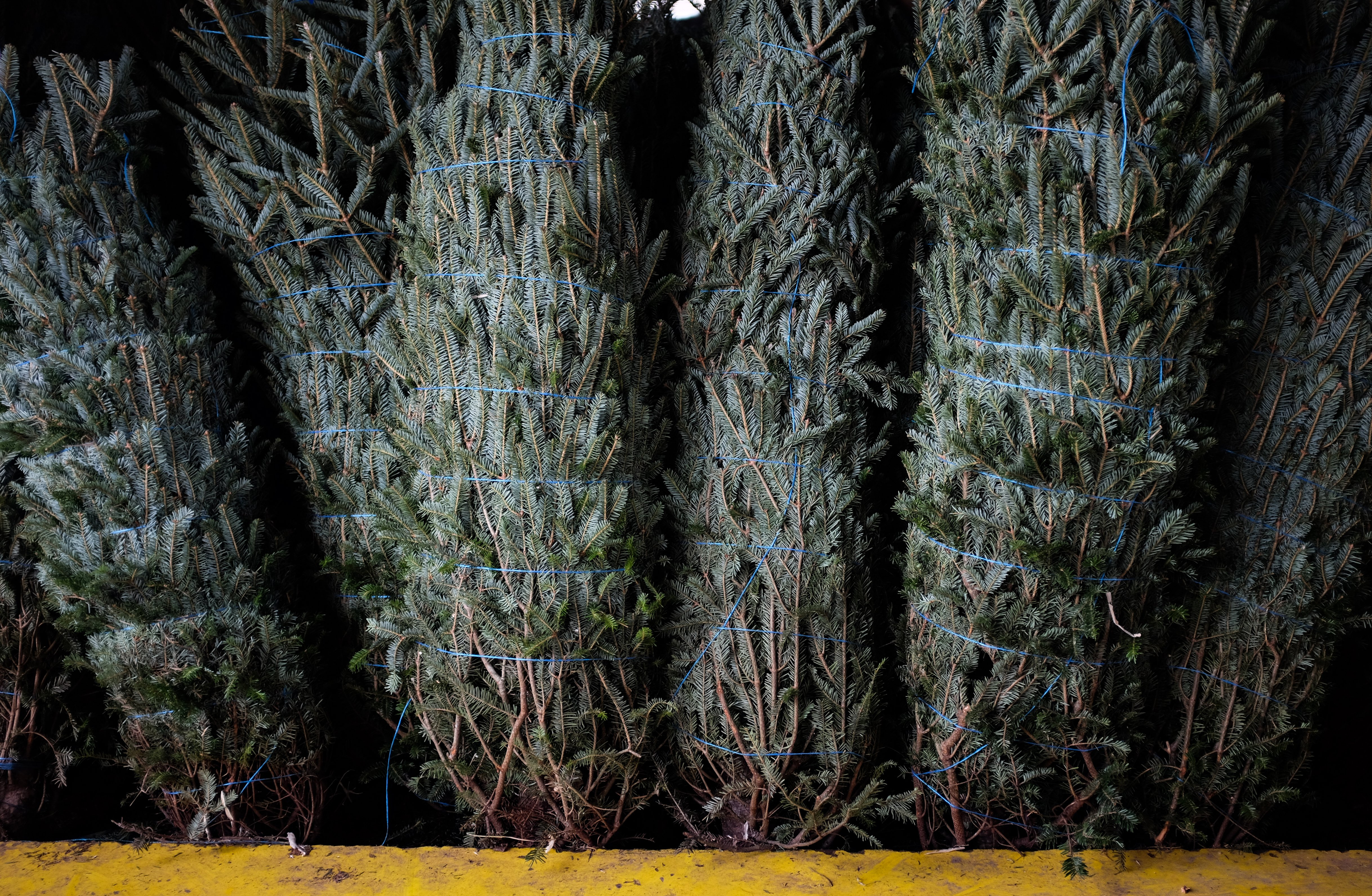 Family\'s \'side project\' turns into booming Christmas tree farm ...