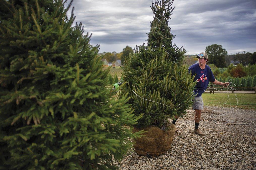 2008 Strikes Back: The Sad Reason Your Christmas Tree