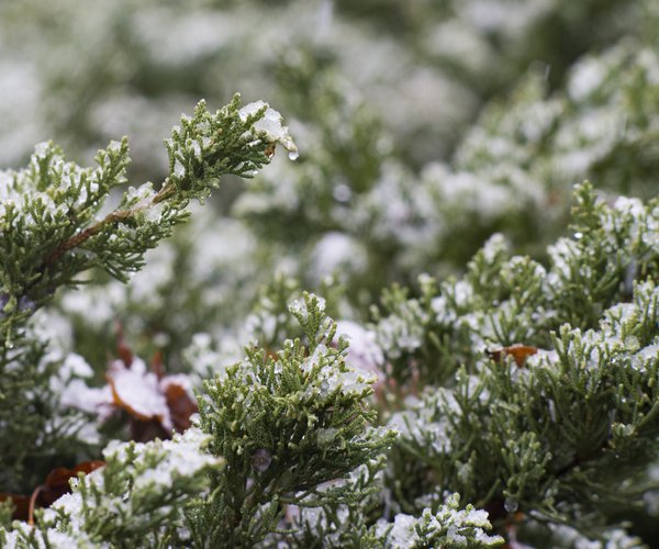 12092017 SNOW 1.jpg