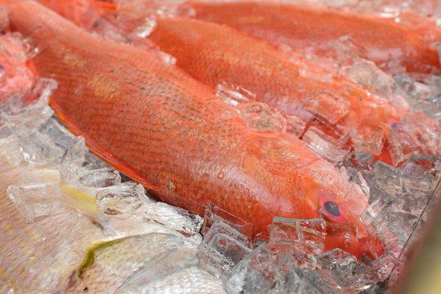 03132019 FISH 2.jpg