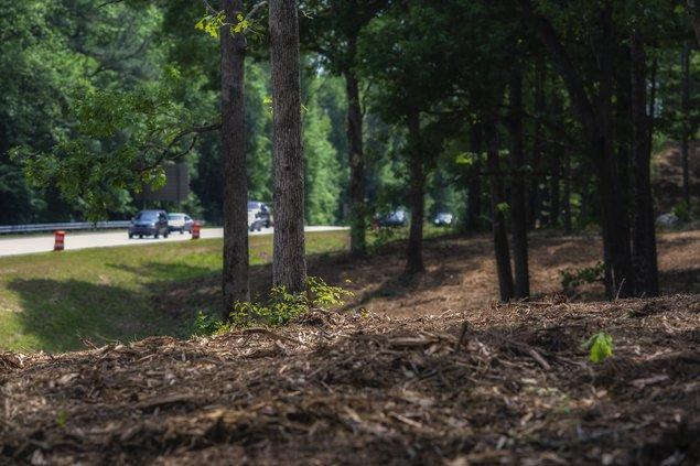 05052019 TREES 4.jpg