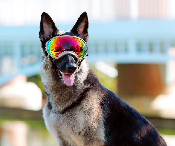05202019 DOG 1.jpg